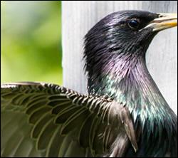 bird removal Bedford