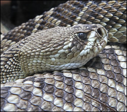 snake removal Bedford
